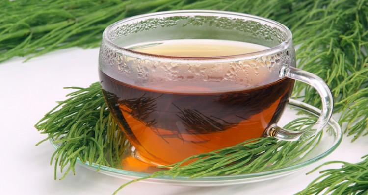 Chá de Cavalinha: Conheça 5 benefícios desse poderoso chá